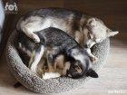 Спят уставшие кли каи